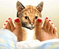 Get Toes