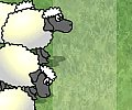 Sheep Reaction